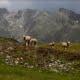 Swisswool_Landschaftspflege_Schafe_Alpen