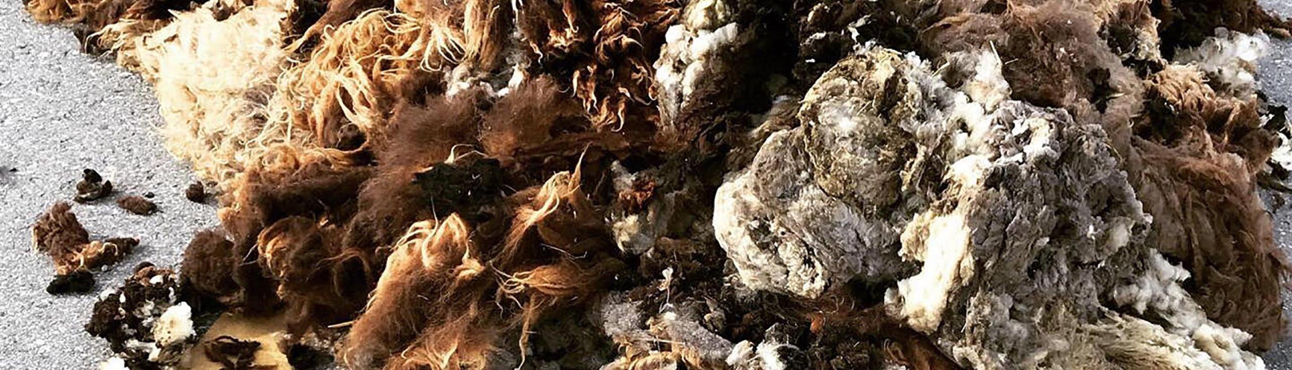 Swisswool_Schafschurwolle_Wollverarbeitung