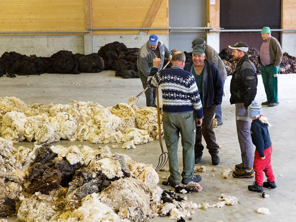 Swisswool_Wollsammlung_Wolle-sammeln_Termine-Wollsammlung