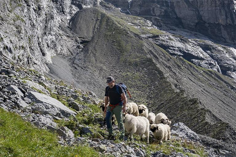 Swisswool_Roselaui-Swisswool-Heinz Brog-Schafe-Berge_Roselaui Gletscher